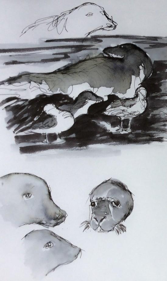 2014-07-17 Seals at Holy Island (8 1)