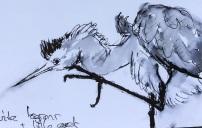 20140921 juvenile herons (2)