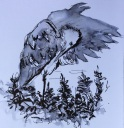 20140921 juvenile herons (4)