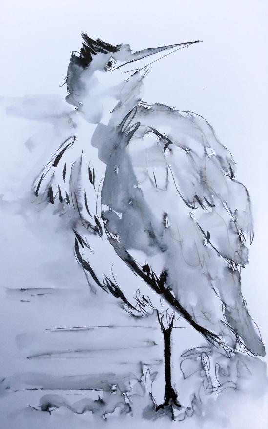 20140921 juvenile herons (5)