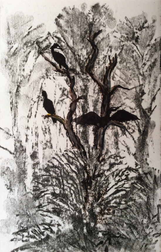 Cormorants roosting in distant tree - charcoal, conte crayon, ink