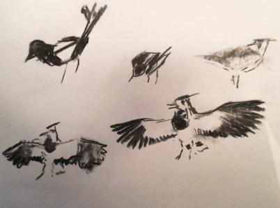 2015 03 14 birds (1)