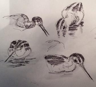 2015 03 14 birds (3)