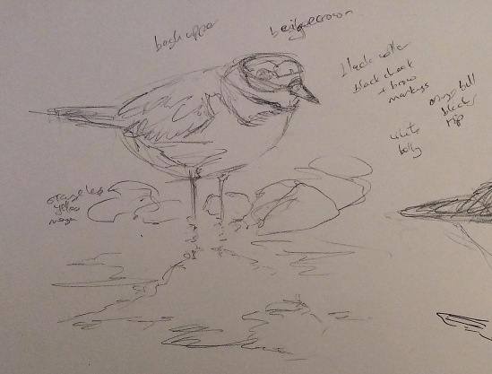2015-04-06 wader sketches (1)