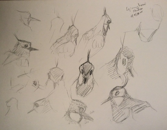 2015-04-06 wader sketches (2)