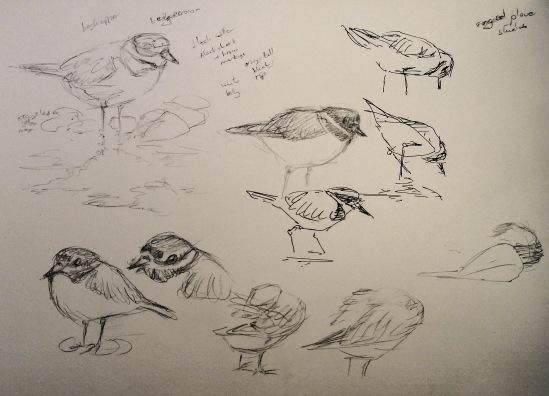 2015-04-06 wader sketches (3)