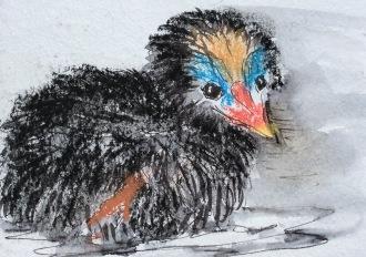2015-05-16 moorhen chick