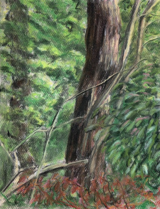 2015-08-08 Siden Hill Wood conte crayon charcoal 1