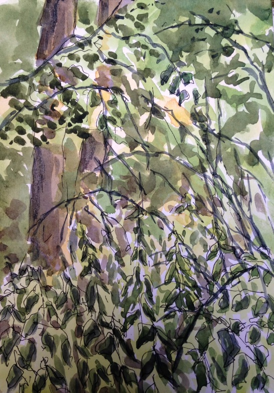 2015-08-08 Siden Hill Wood watercolour (2)
