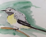 2016-06-05 canal sketch grey wagtail